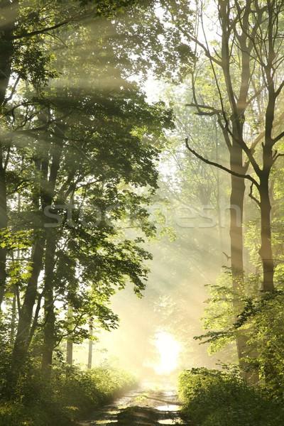 Stock fotó: út · tavasz · erdő · hajnal · ködös · reggel
