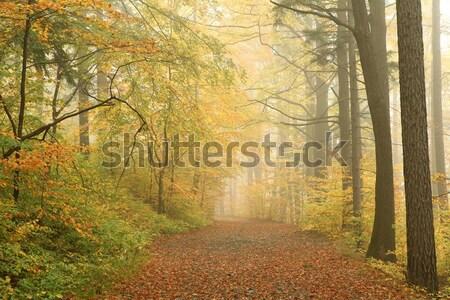 Camino brumoso otono forestales brumoso primavera Foto stock © nature78
