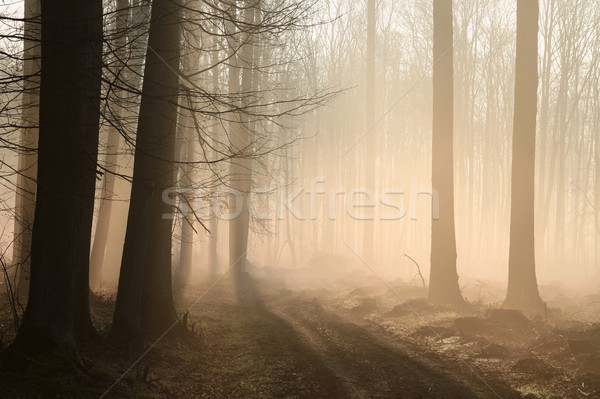 Path in misty early spring forest Stock photo © nature78