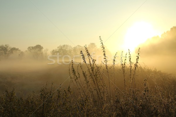 Amanecer brumoso pradera brumoso otono Foto stock © nature78