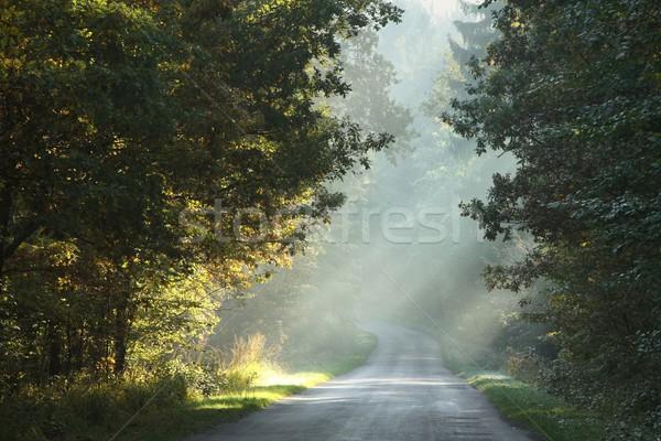 Vidéki út ősz erdő sáv fut Stock fotó © nature78