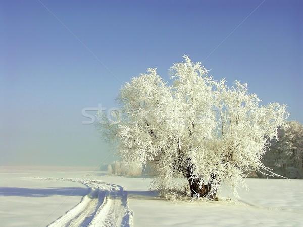 Sauce árbol cubierto helada cielo azul naturaleza Foto stock © nature78