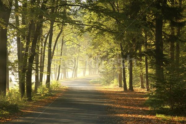 Erdő út hajnal ködös nap levél Stock fotó © nature78