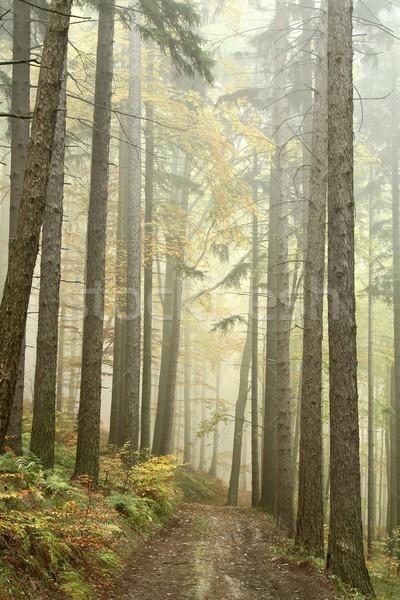 Yol puslu sonbahar orman dağlar bahar Stok fotoğraf © nature78