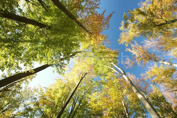 осень лес Sunshine пейзаж деревья красоту Сток-фото © nature78