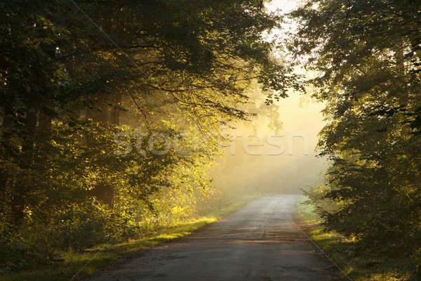Rural lane at dawn Stock photo © nature78
