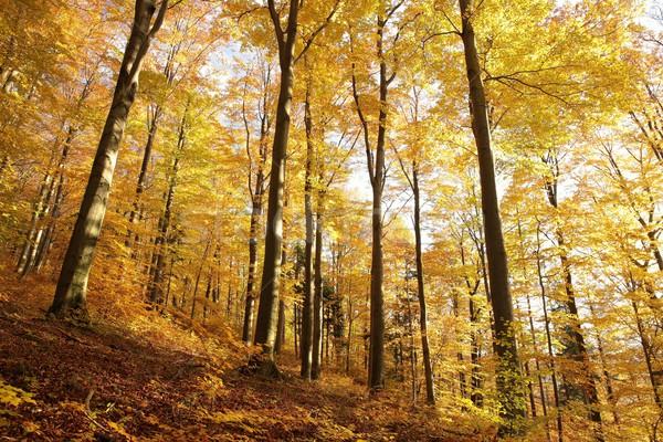 Stock fotó: Erdő · ősz · színek · fenséges · égbolt · tájkép