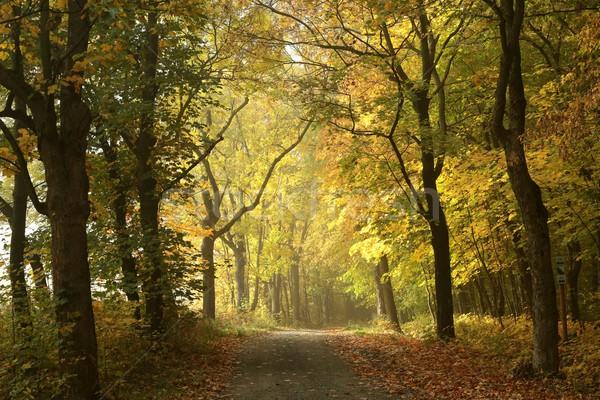 Saison d'automne forêt matin feuille Photo stock © nature78