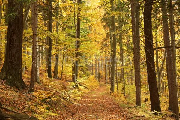 тропе лес лист осень золото Сток-фото © nature78