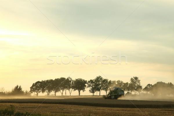 Récolte coucher du soleil soleil nature blé maïs Photo stock © nature78
