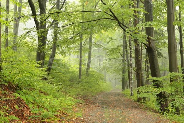 тропе туманный весны пейзаж деревья парка Сток-фото © nature78