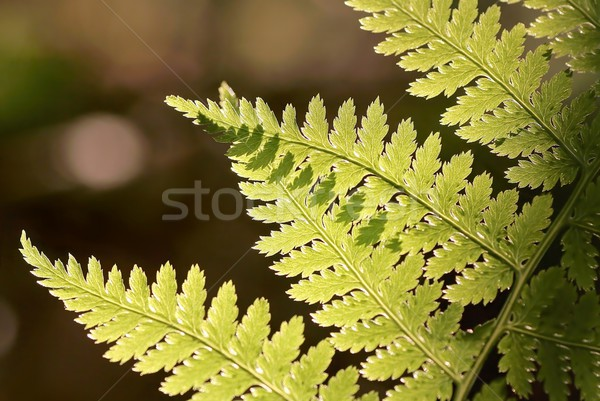Closeup of fern Stock photo © nature78