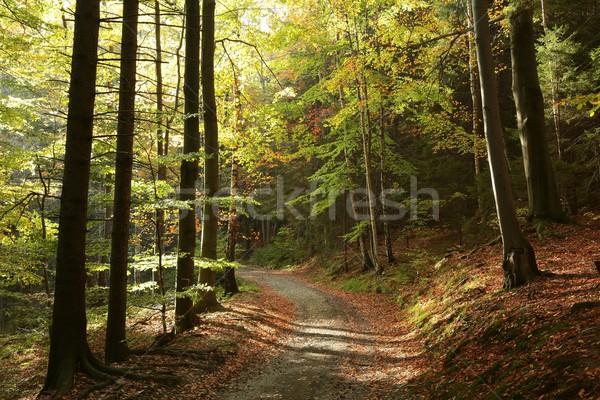 Nyom ősz erdő festői tájkép fák Stock fotó © nature78