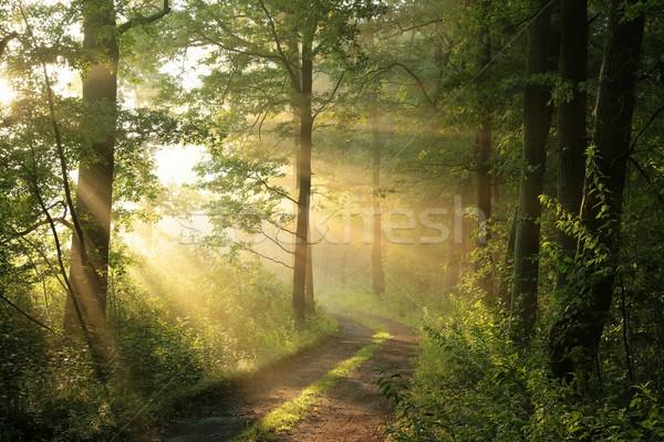 Bahar orman sabah toprak yol yaprak döken Stok fotoğraf © nature78