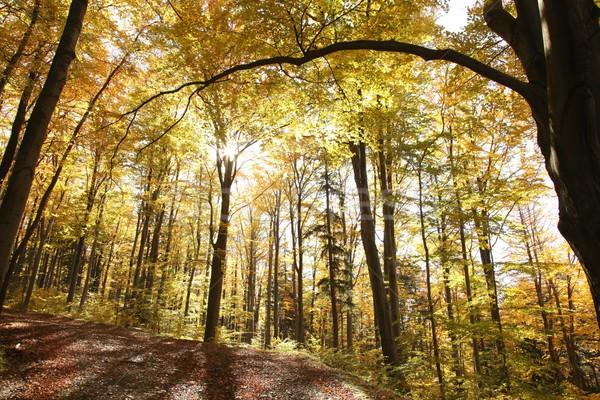 осень лес природы пейзаж деревья Сток-фото © nature78
