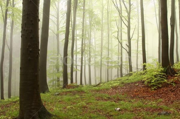 Misty printemps forêt montagne pente nature Photo stock © nature78