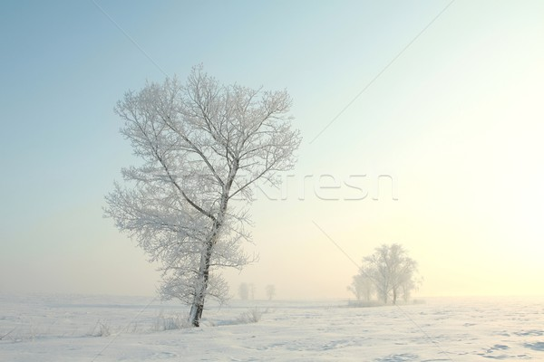 Ijzig winter boom dawn permanente alleen Stockfoto © nature78