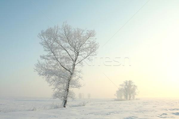 Fagyos tél fa hajnal áll egyedül Stock fotó © nature78