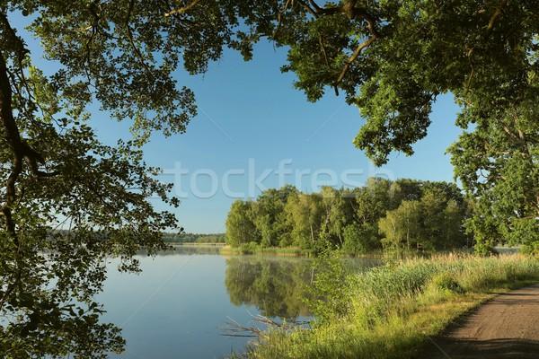 árboles creciente isla vista costa lago Foto stock © nature78