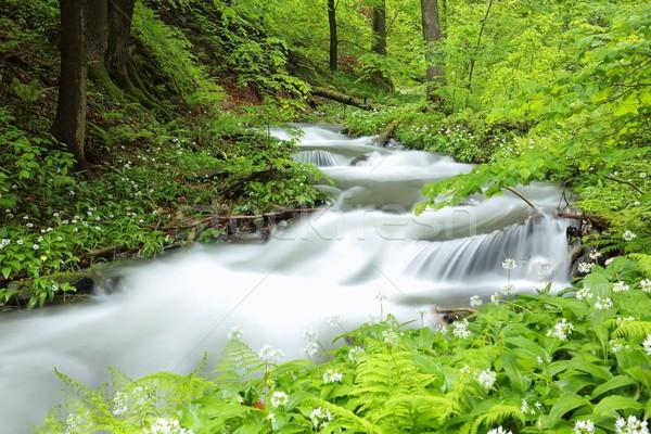 Bos stream voorjaar vegetatie water boom Stockfoto © nature78