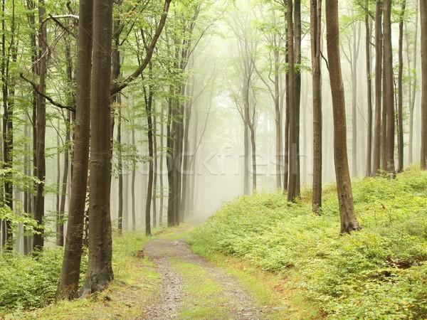 лес тропе тумана горные туманный Сток-фото © nature78