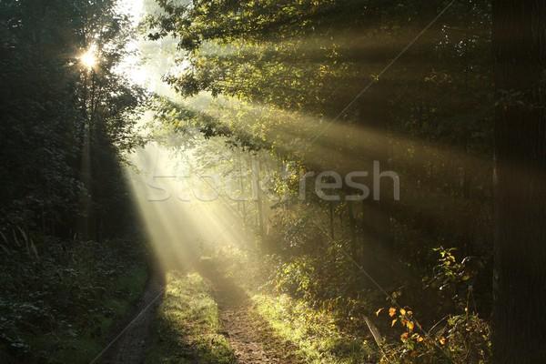 Forêt sentier sunrise chemin de terre automne aube Photo stock © nature78
