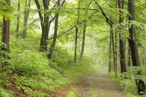 Erdő út köd nyom ködös időjárás Stock fotó © nature78