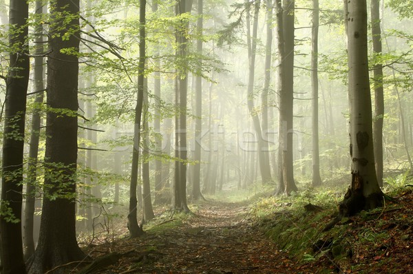 Trail in enchanted autumn forest Stock photo © nature78