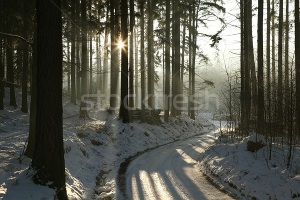 Path in winter coniferous forest Stock photo © nature78