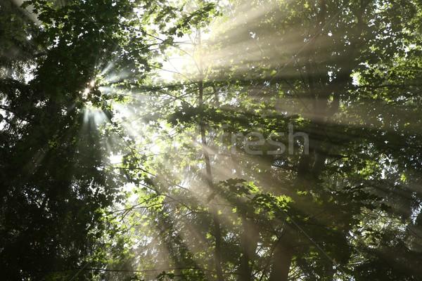 рано осень лес солнечный свет клен деревья Сток-фото © nature78