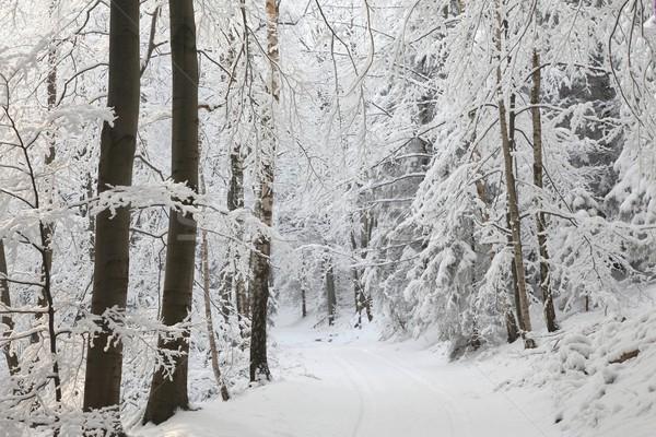 Hiver forêt sentier arbres montagnes sud Photo stock © nature78
