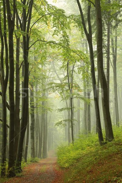 Iz puslu sonbahar orman manzara ağaçlar Stok fotoğraf © nature78