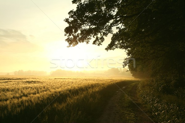 Dirt road at dawn Stock photo © nature78