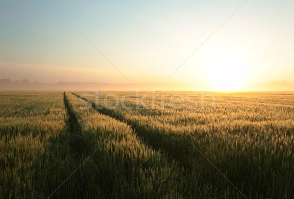 Amanecer campo grano primavera sol paisaje Foto stock © nature78