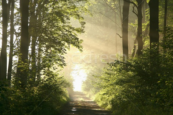 Spring forest on a misty morning Stock photo © nature78