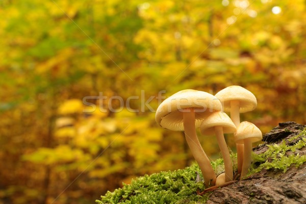Setas forestales belleza espacio grupo otono Foto stock © nature78