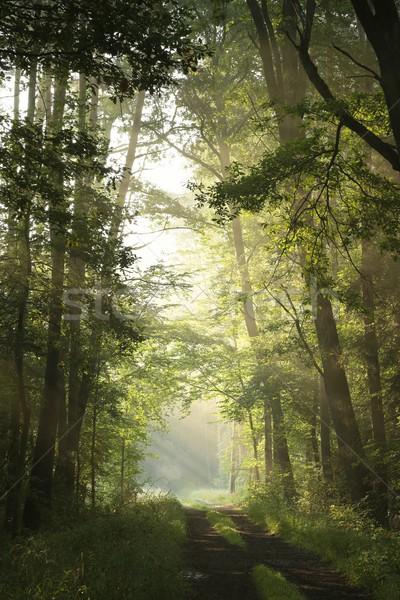 Сток-фото: весны · лес · туманный · утра · грунтовая · дорога · лиственный