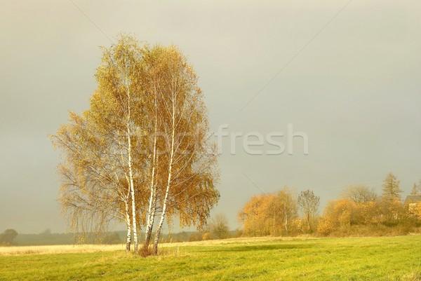 Autumn birches at dusk Stock photo © nature78