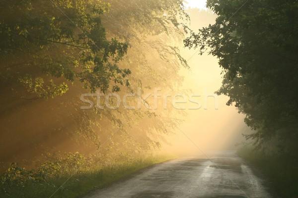 Camino rural anochecer forestales camino niebla primavera Foto stock © nature78