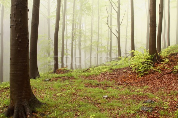 Ködös tavasz erdő hegy emelkedő természet Stock fotó © nature78