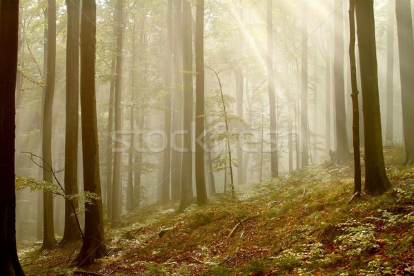 Misty autunno foresta sole luce del sole splendente Foto d'archivio © nature78