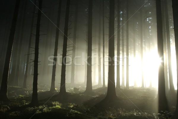 лес Sunshine утра солнце Сток-фото © nature78