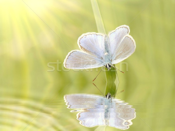бабочка весны луговой Sunshine глаза Сток-фото © nature78
