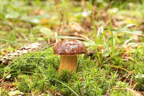 菌 森林 緑 色 新鮮な 森 ストックフォト © nature78
