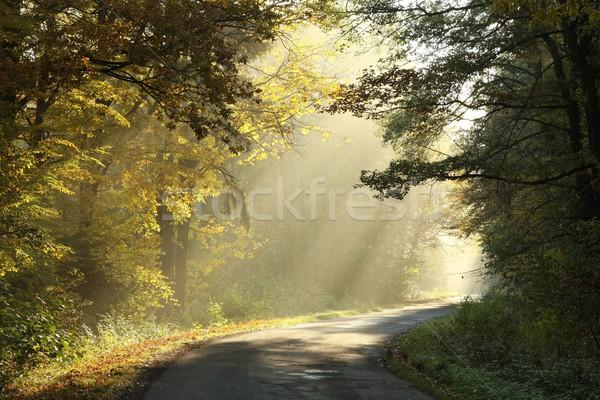 ストックフォト: 秋 · 森林 · 霧の · 午前 · 田舎道 · を実行して