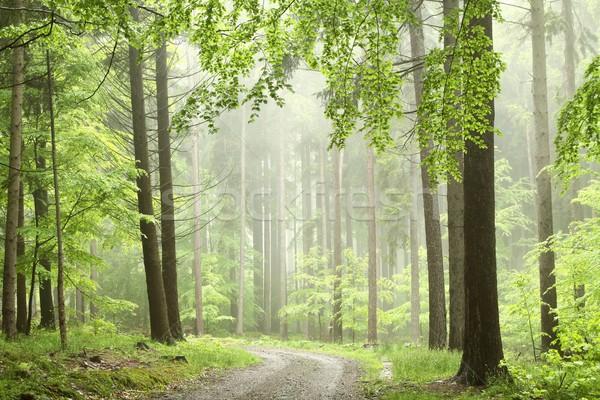 Forestales camino niebla árboles montana niebla Foto stock © nature78