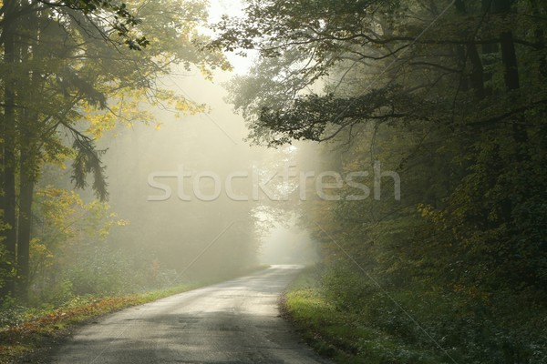 Otono forestales brumoso manana camino rural ejecutando Foto stock © nature78