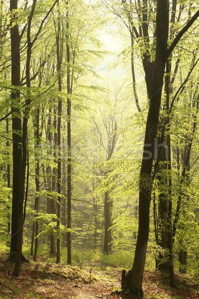 Printemps forêt soleil majestueux nature réserve Photo stock © nature78