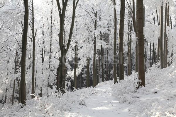 Lasu mroźny zimą dzień słoneczny rano Zdjęcia stock © nature78