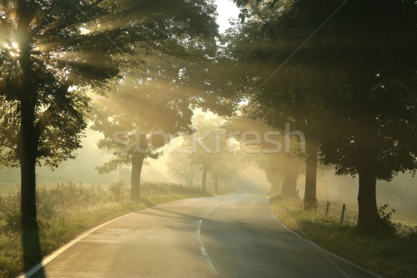 Country road on a misty morning Stock photo © nature78